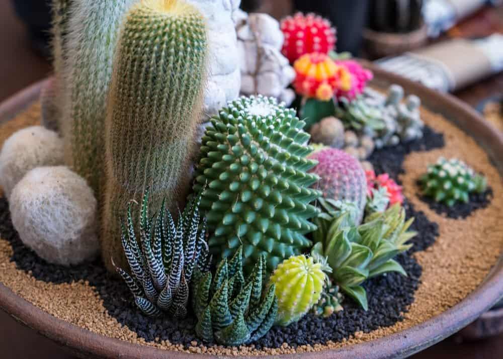 Gardening Activities for Kids with Indoor Cactus Garden