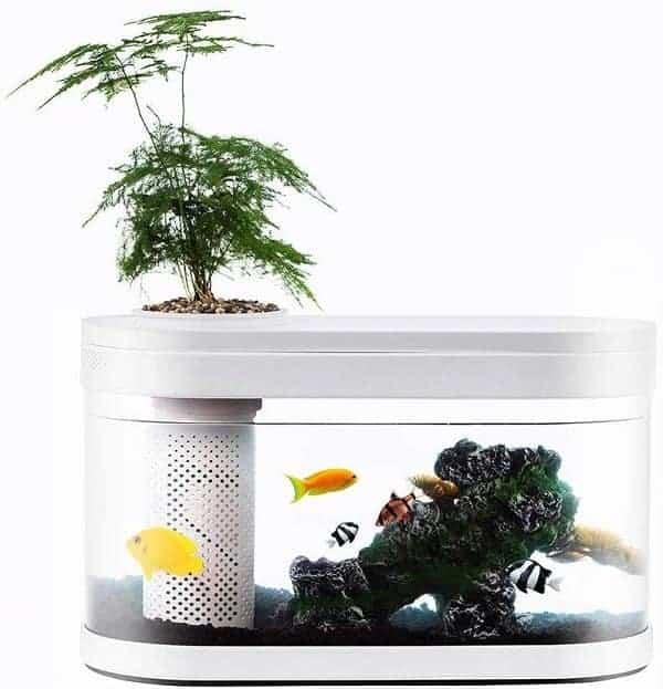 Neverland Aquaponics Ecosystem