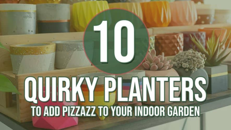 10 Quirky Planters to Add Some Pizzazz to Your Indoor Garden