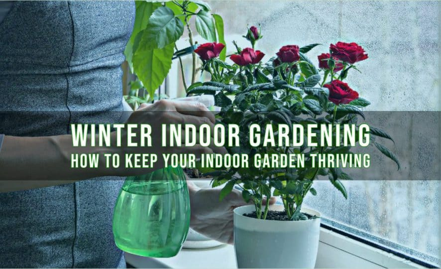 Winter Indoor Gardening - How to Keep Your Indoor Garden Thriving