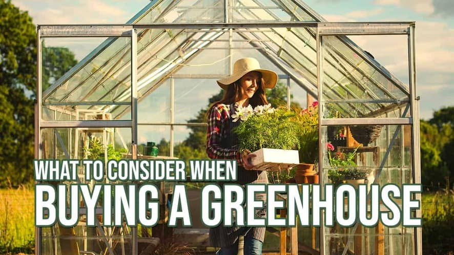 What to Consider When Buying a Greenhouse