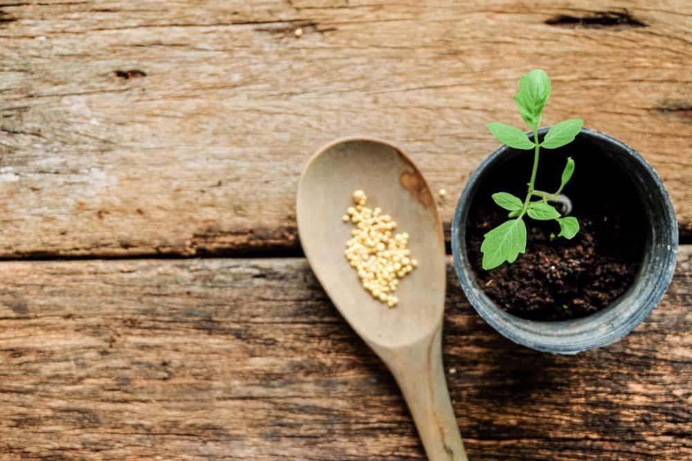 Fertilizing Potted Plant