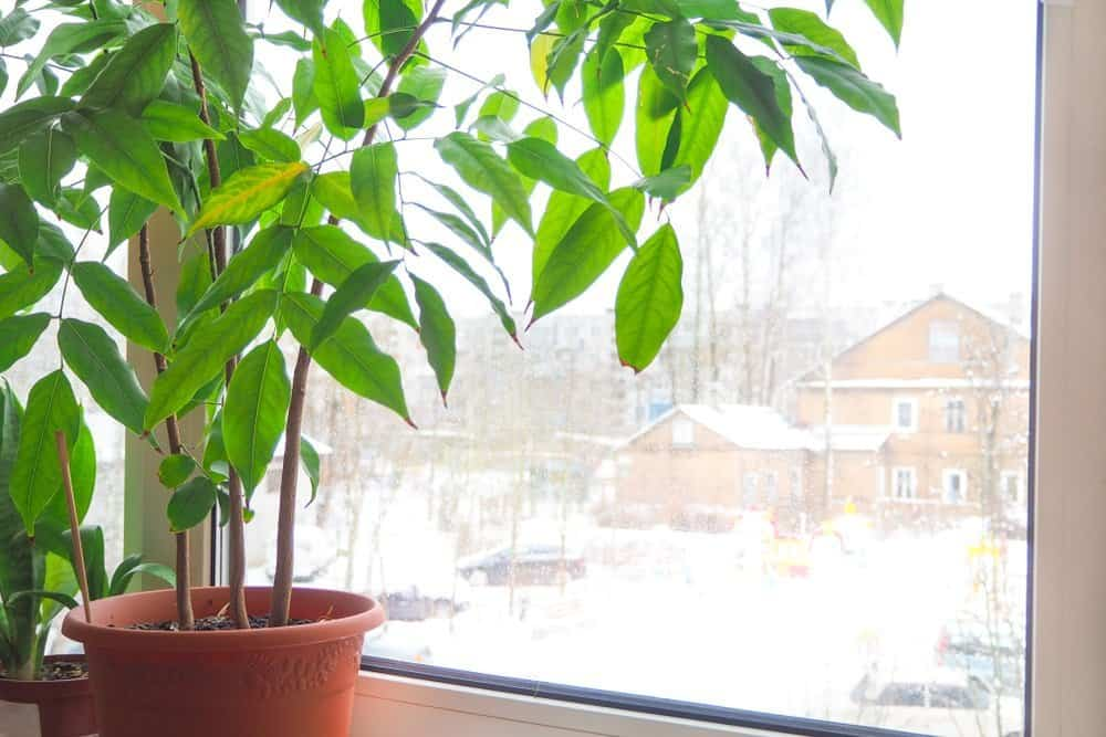 Potted Plant by Sunny Window
