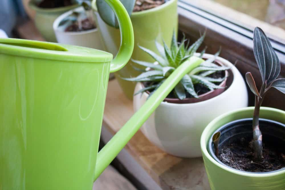 Watering Potted Plant
