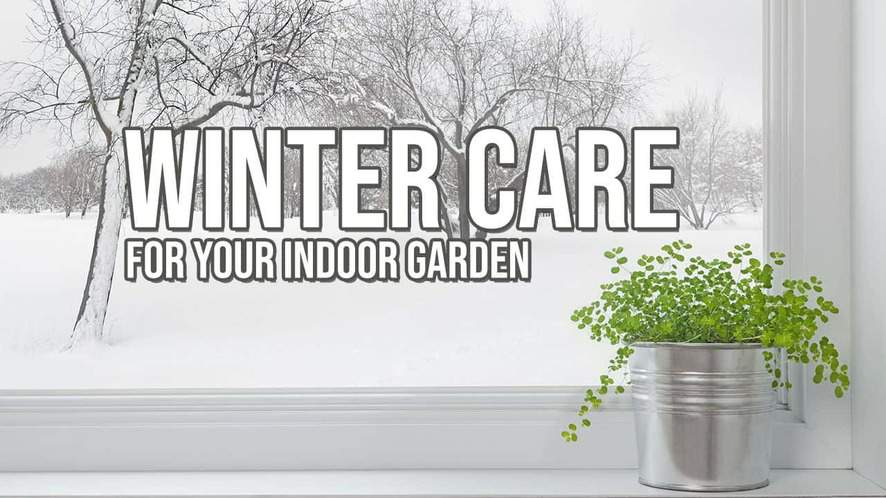 How to Keep Your Indoor Garden Thriving in the Winter