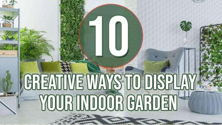 Top 10 Creative Ways to Display Your Indoor Garden