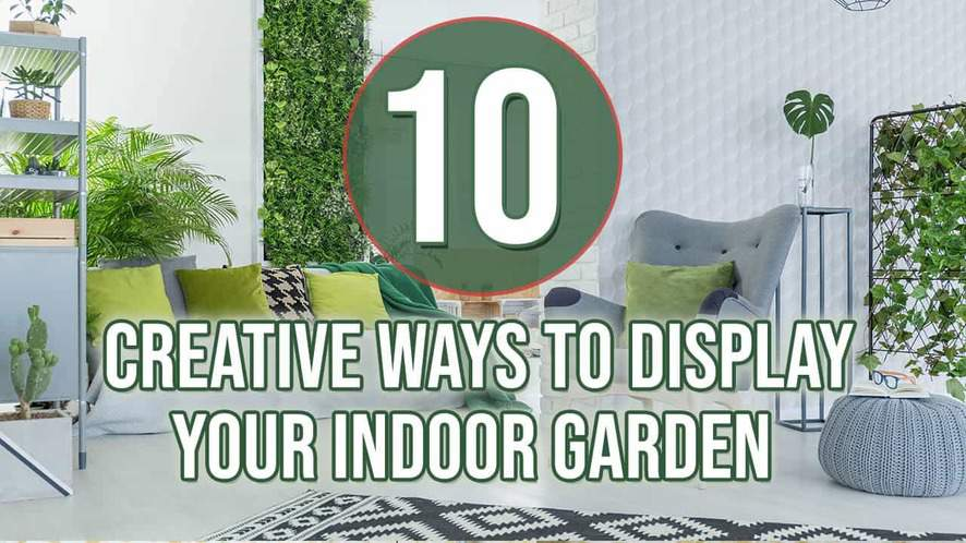 Top 10 Creative Ways to Display Your Indoor Garden