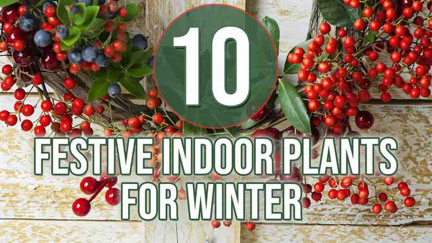 Top 10 Festive Indoor Plants for Winter