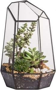 terrarium indoor garden displays