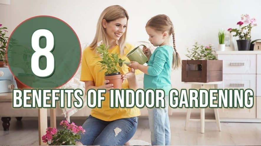 8 Benefits of Indoor Gardening