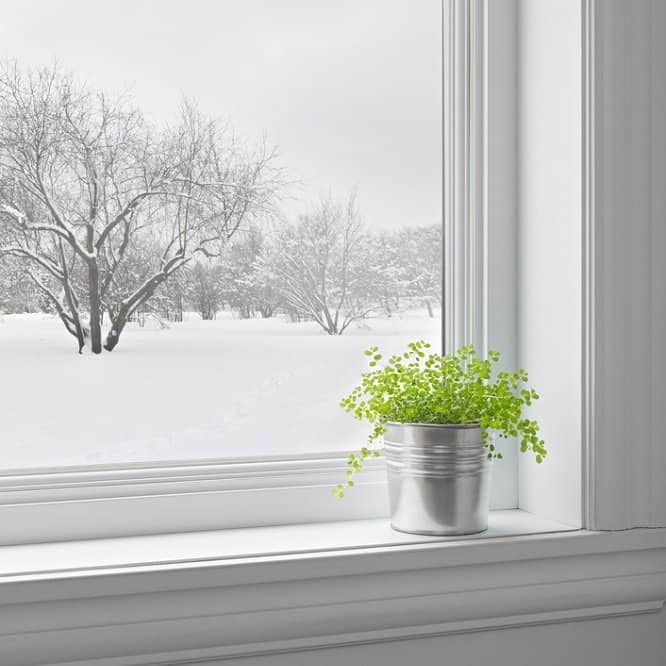 Plant by snowy window
