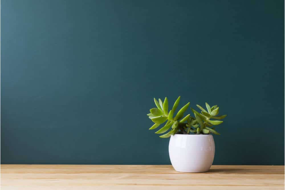 How to get rid of indoor plant pests - Quarantine new plants