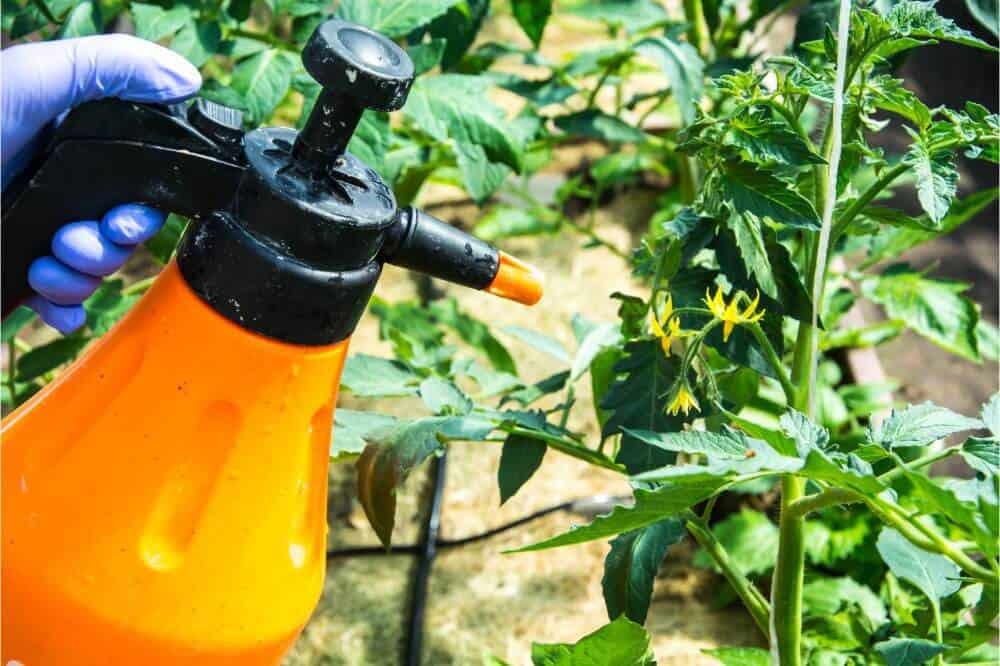 Control plant pests