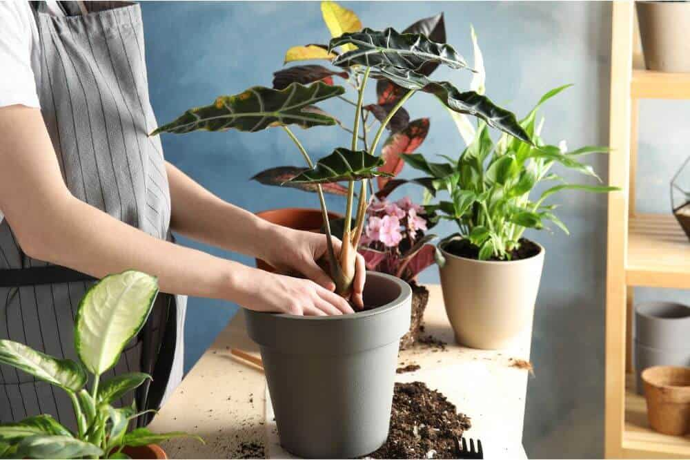 Use sterile soil for plants