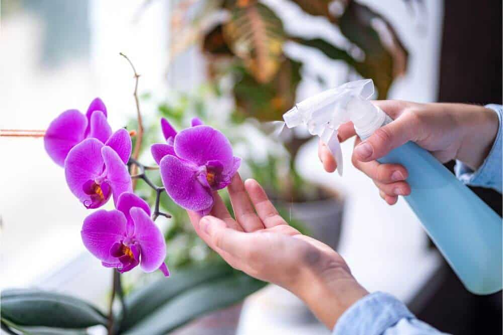 Feeding your orchids