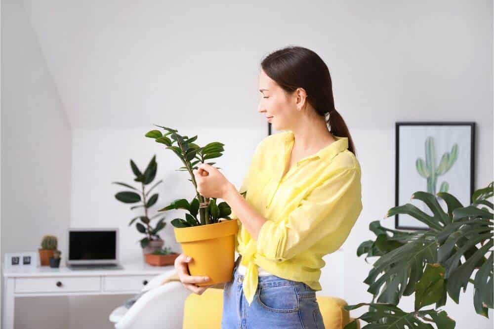 Taking care of your plants