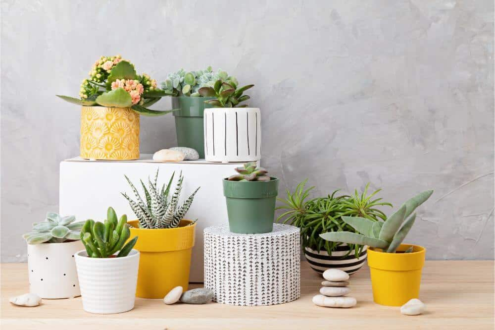 How to get rid of indoor plant pests - Choose healthy plants