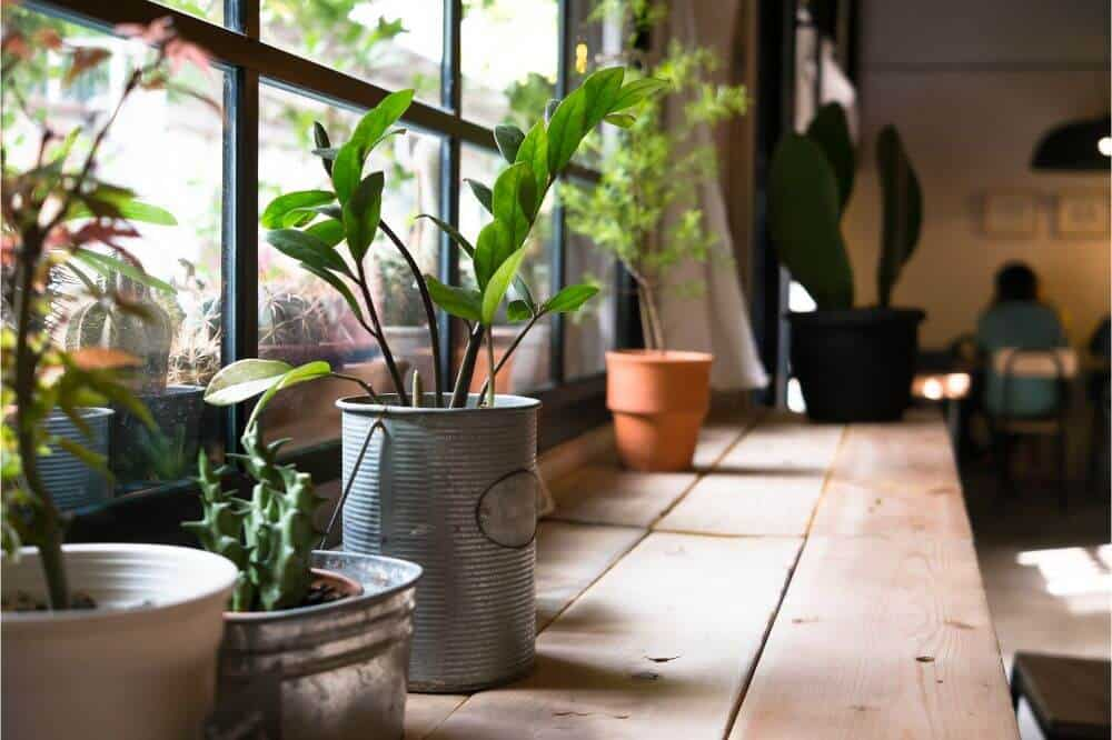 What type of light do plants need