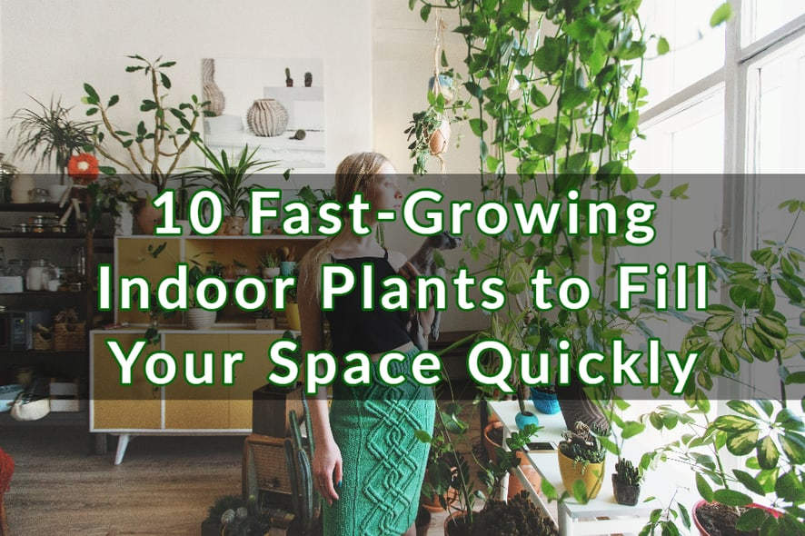 10 Fast-Growing Indoor Plants to Fill Your Space Quickly