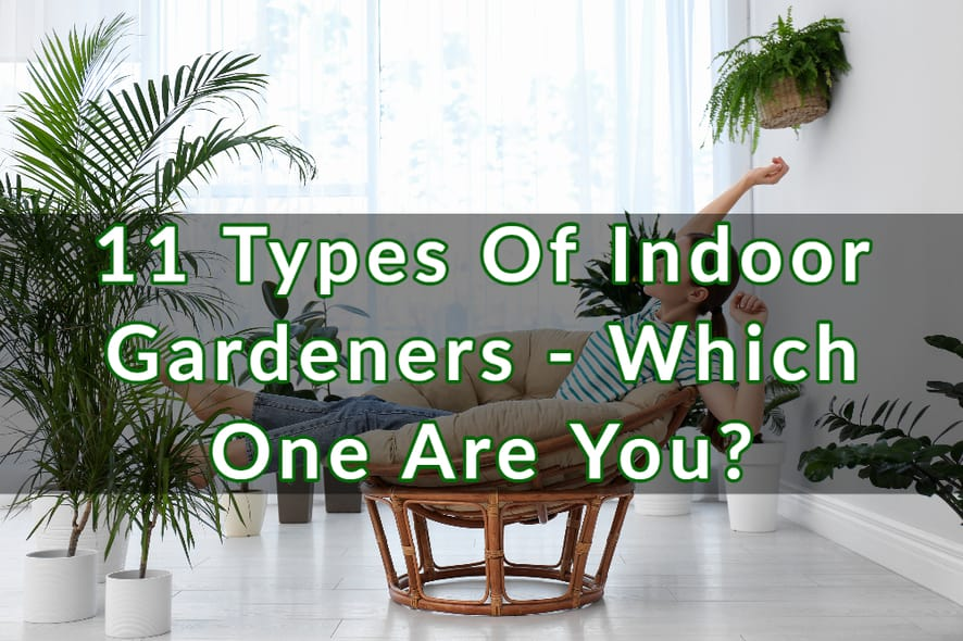 11 Types Of Indoor Gardeners - Which One Are You