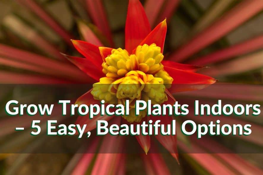 Grow Tropical Plants Indoors