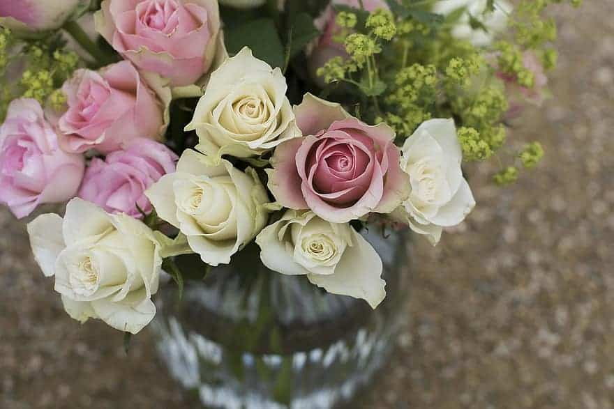 Fast Growing Indoor Plants - miniature roses