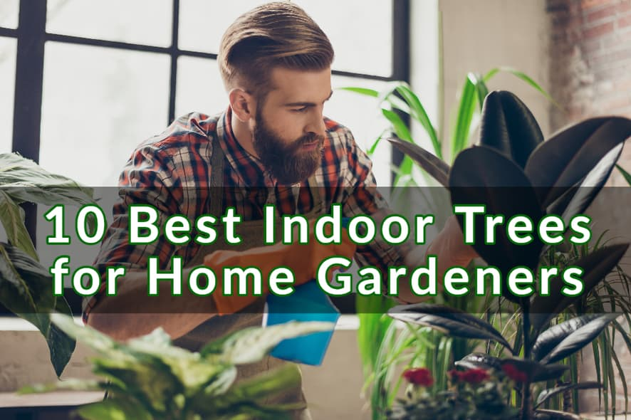 10 Best Indoor Trees for Home Gardeners