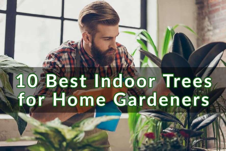 10 Best Indoor Trees for Home Gardeners