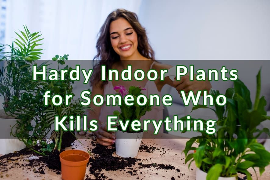 Hardy Indoor Plants for Someone Who Kills Everything