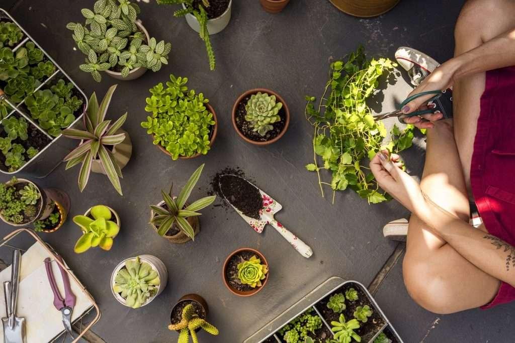Plant Business Basics