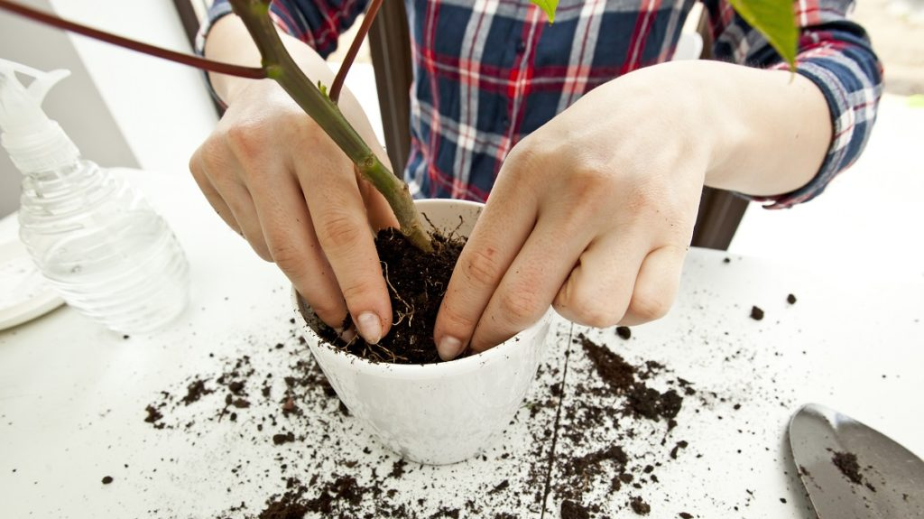 Types of Plant Care Businesses