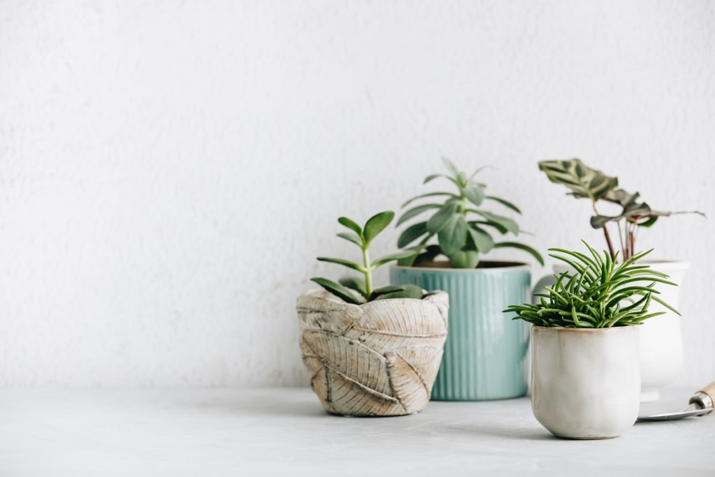 Plant Business Dos and Don'ts