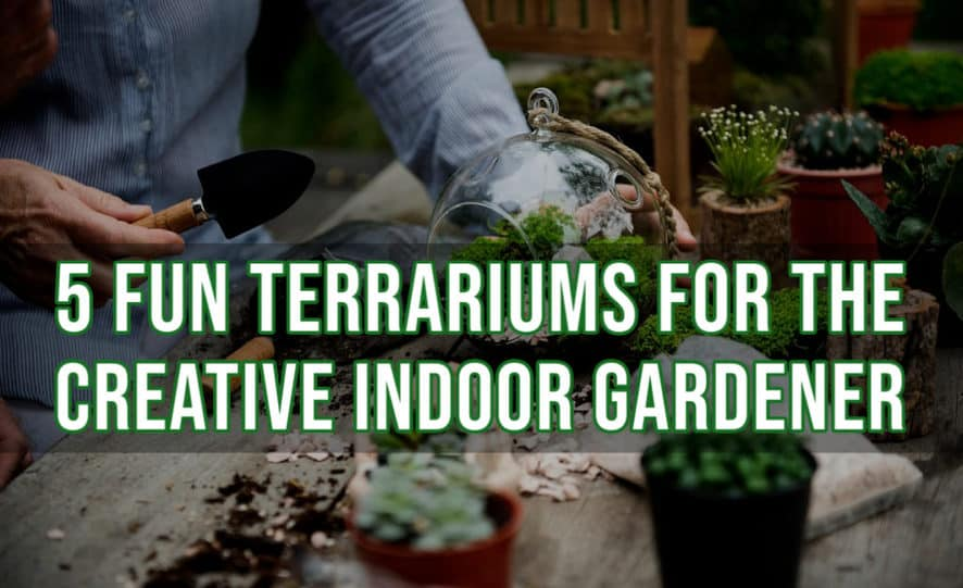 5 Fun Terrariums for the Creative Indoor Gardener