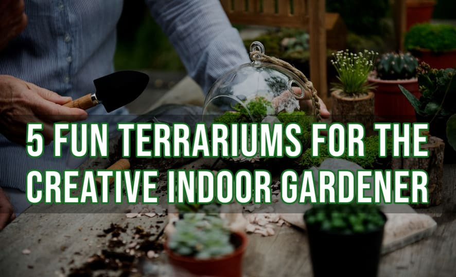5 Fun Terrariums for the Creative Indoor Gardener