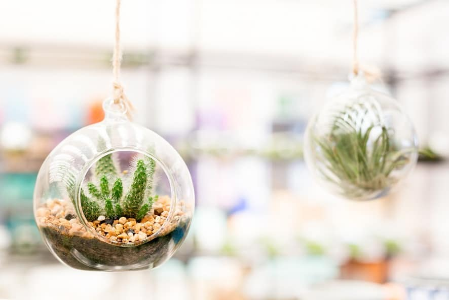 Create Hanging Terrariums