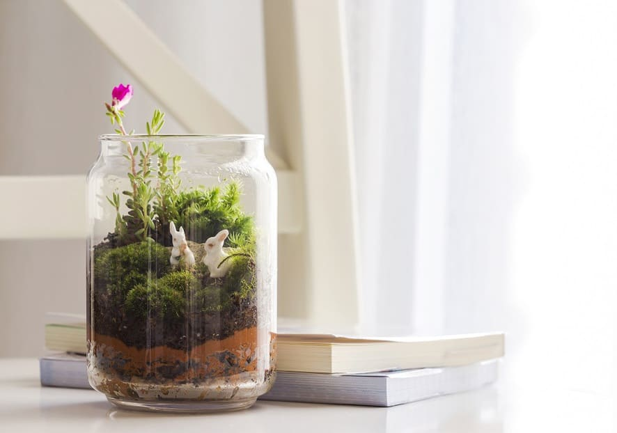 Create an open air terrarium