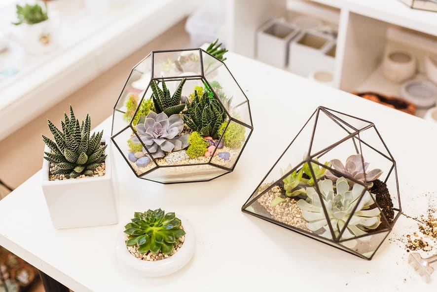 Creating Succulent Terrariums