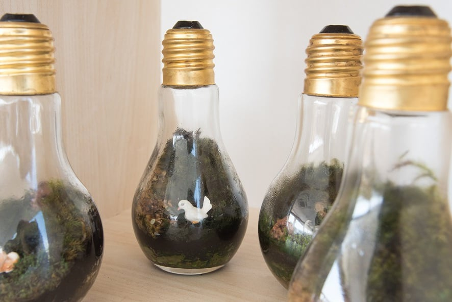 Creating Upcycled Terrariums