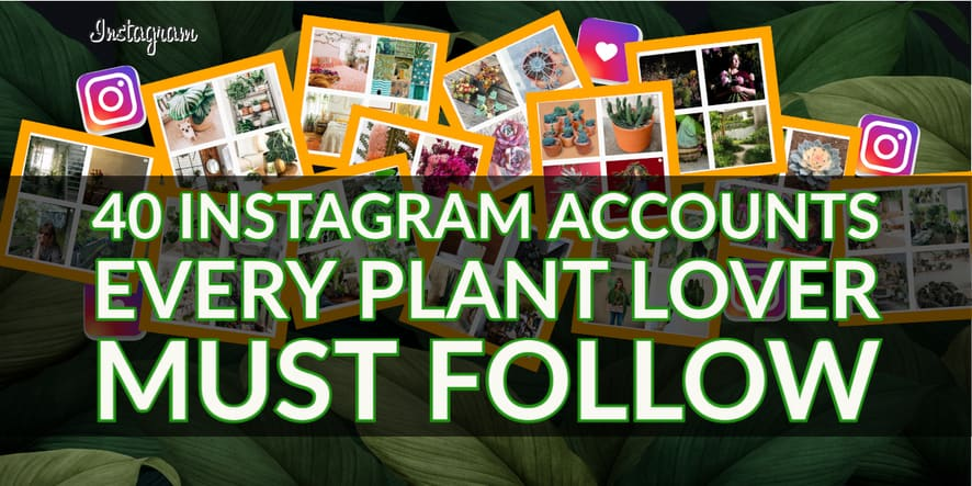 40 Instagram Accounts Every Plant Lover Must Follow