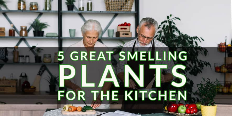 Great Smelling Plants for the Kitchen