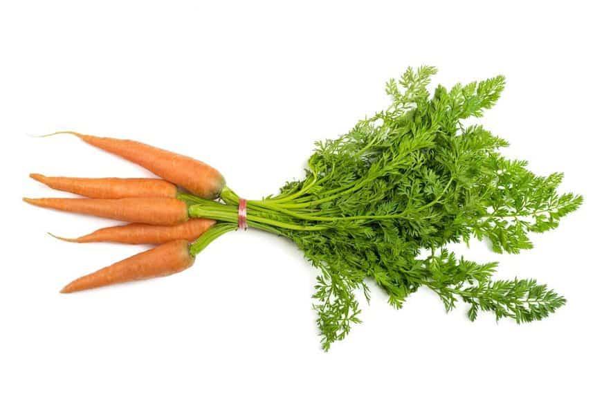 Indoor Vegetable Gardening Carrots