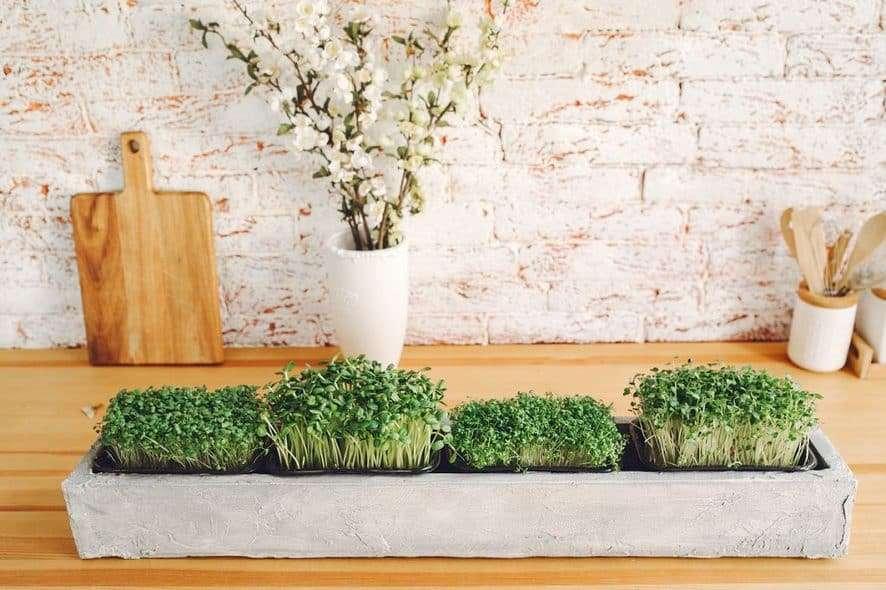 Indoor Microgreens