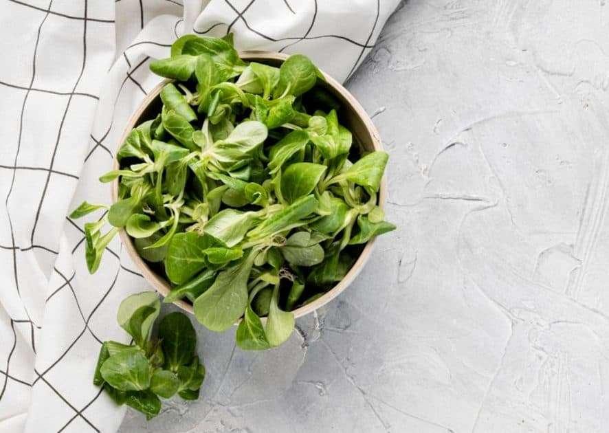 Indoor Gardening Salad Greens
