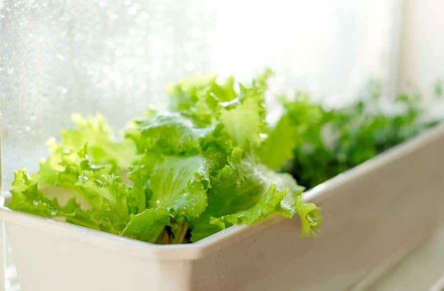 Lighting Your Indoor Vegetable Garden