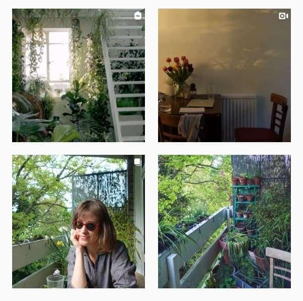 Plant Accounts on Instagram