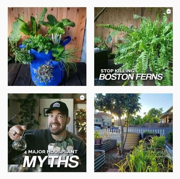 Plant Instagram Accounts