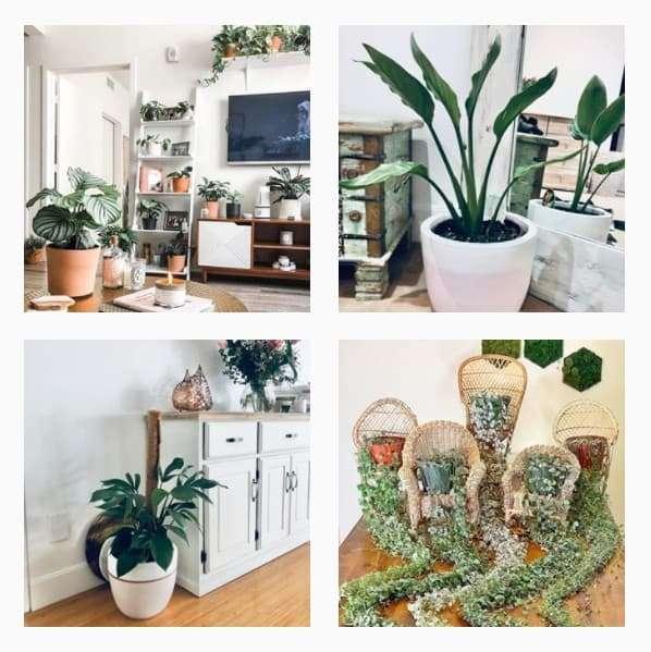 Instagram Plant Accounts