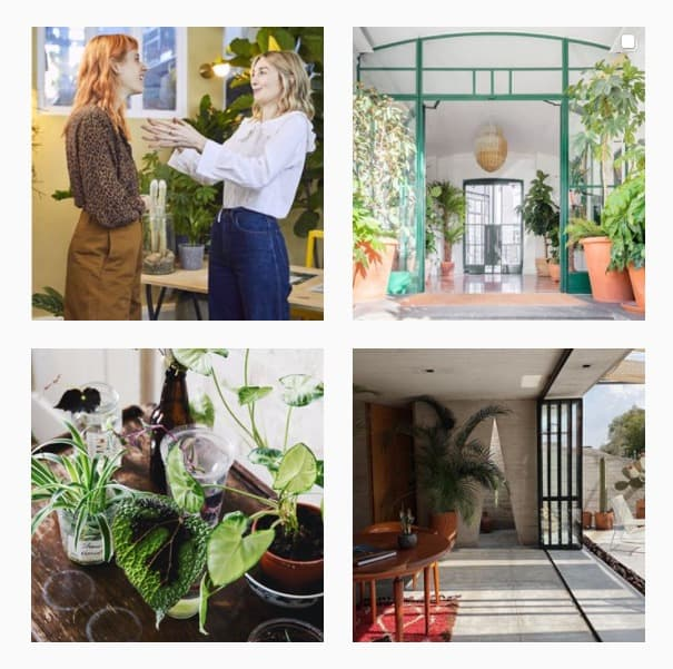 Instagram Accounts About Plants