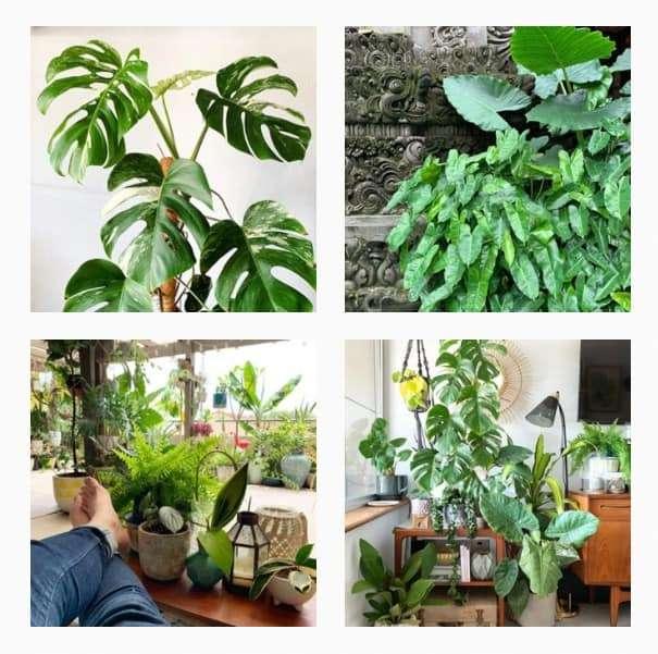 Plant Instagram Accounts to Follow