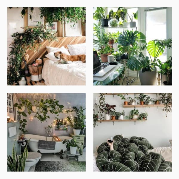 Instagram Accounts with Plant Images